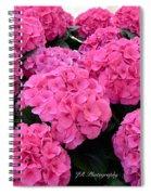 Pink Hydrangeas Spiral Notebook