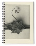 Plant Studies, 1928, Nature Series, By Karl Blossfeldt  Spiral Notebook