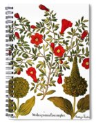 Pomegranate, 1613 Spiral Notebook