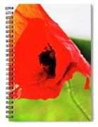 Poppy The Beauty Spiral Notebook