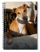 Portrait Of An Italian Greyhound Spiral Notebook