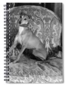 Portrait Of An Italian Greyhound In Black And White Spiral Notebook