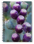 Prickly Pear Fruit  Spiral Notebook