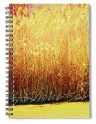 Pueblo Downtown River Grasses 4 Spiral Notebook