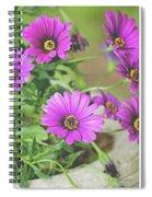 Purple Aster Flowers Spiral Notebook