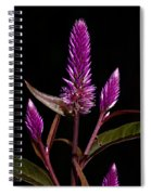 Purple Spiral Notebook