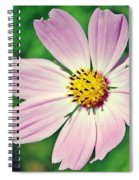 Purple Perfection Spiral Notebook
