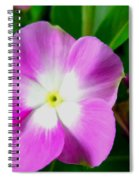 Purple Periwinkle Flower 1 Spiral Notebook