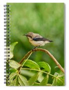 Purple Sunbird Spiral Notebook
