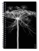 Queen Annes Lace, X-ray Spiral Notebook
