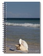 Queen Conch On The Beach Spiral Notebook