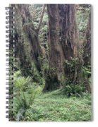 Quinault Rain Forest 3156 Spiral Notebook