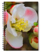 Quince Toyo-nishiki Spiral Notebook