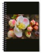 Quince Toyo Nishiki Spiral Notebook