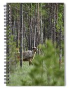 Rare And Wild. Finnish Forest Reindeer Spiral Notebook