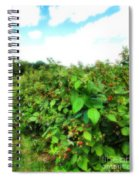 Raspberry Fields 2  Spiral Notebook