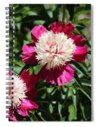 Red And Pink Peony Spiral Notebook