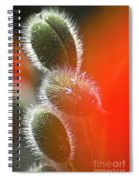 Red Corn Poppy Bud And Red Dots Spiral Notebook