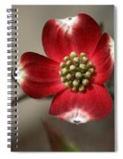 Red Dogwood Spiral Notebook
