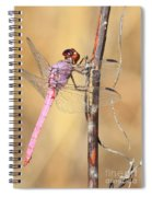 Red Dragonfly Portrait Spiral Notebook