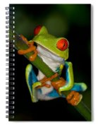 Red-eyed Green Tree Frog Hanging On Spiral Notebook