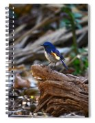 Red-flanked Bluetail 2 Spiral Notebook