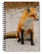 Red Fox 3 Spiral Notebook