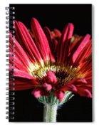 Red Gerbera 1 Spiral Notebook