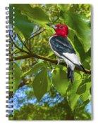 Red-headed Woodpecker Spiral Notebook