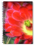 Red Hedgehog Spiral Notebook
