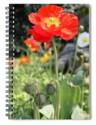 Red Iceland Poppy Spiral Notebook