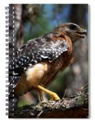 Red Shouldered Hawk Spiral Notebook