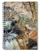 Red-tailed Hawk -5 Spiral Notebook