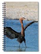 Reddish Egret Spiral Notebook