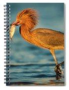 Reddish Egret With Fish Spiral Notebook