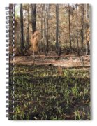Regrowth After A Controlled Burn Spiral Notebook