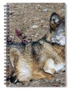 Resting Wolf Spiral Notebook