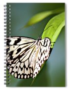 Rice Paper Butterfly 5 Spiral Notebook