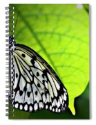 Rice Paper Butterfly 6 Spiral Notebook