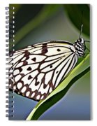 Rice Paper Butterfly 8 Spiral Notebook