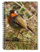 Robin In Hedgerow Spiral Notebook