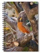 Robin On Cut Down Tree Branch Spiral Notebook