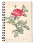 Rosa Gallica Pontiana Spiral Notebook