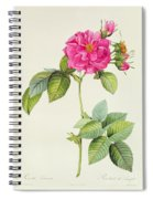 Rosa Turbinata Spiral Notebook