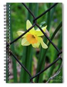 1 Sad Daffy Behind Bars Spiral Notebook
