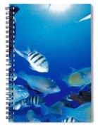 Saipan Marine Life Spiral Notebook