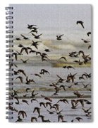 Sand Pipers In Flight Spiral Notebook
