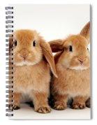 Sandy Lop Rabbits Spiral Notebook
