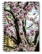 Saucer Magnolias In Central Park Spiral Notebook