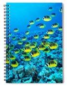 Schooling Raccoon Spiral Notebook